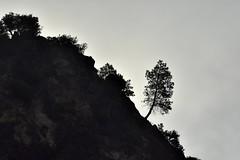_DSC4697 : matinée brumeuse @ Vernet-les-Bains - Photo of Codalet