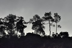 _DSC4696 : matinée brumeuse @ Vernet-les-Bains - Photo of Codalet