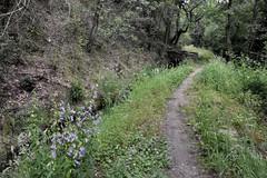 _DSC4717 : le long du canal de Bobère - Photo of Codalet