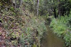_DSC4712 : le long du canal de Bobère - Photo of Conat