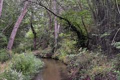 _DSC4710 : le long du canal de Bobère - Photo of Codalet