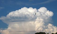 Temps orageux à Villeneuve d'Ascq