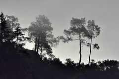 _DSC4701 : matinée brumeuse @ Vernet-les-Bains - Photo of Codalet