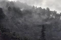 _DSC4694 : matinée brumeuse @ Vernet-les-Bains - Photo of Codalet