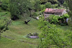 _DSC4722 : environs de l'abbaye St Michel de Cuxa - Photo of Conat