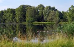 Episy fishing pond - Photo of Nonville