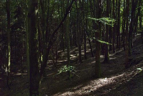 27061907 Kilmurray Woods