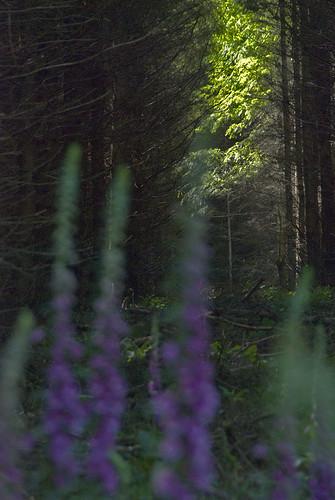 27061905 Kilmurray Woods