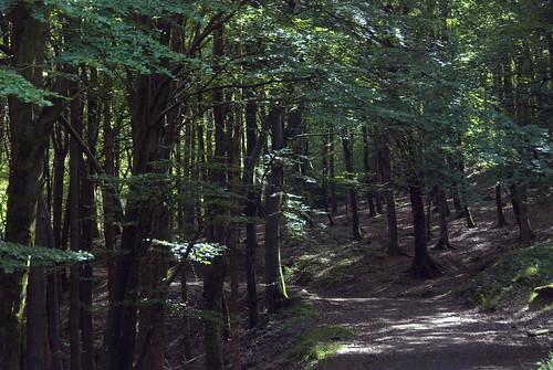 27061906 Kilmurray Woods