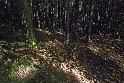 27061910 Kilmurray Woods
