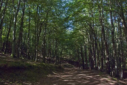27061909 Kilmurray Woods
