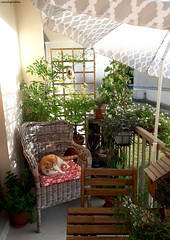 matin à la fraiche!!!!! sur mon balcon