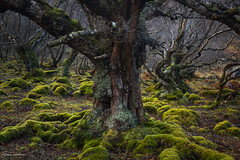 Woodland/Trees/Leaves