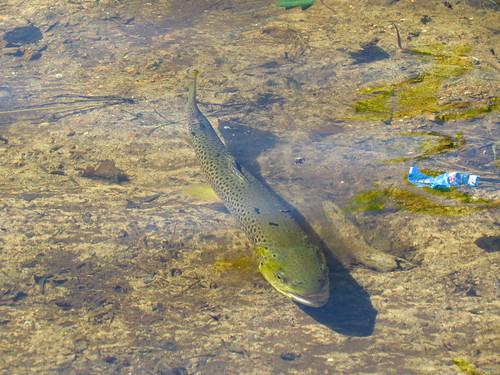 Noyer le poisson