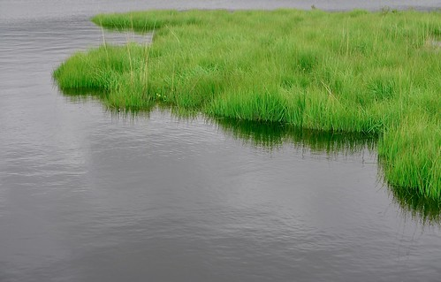 Grass edge