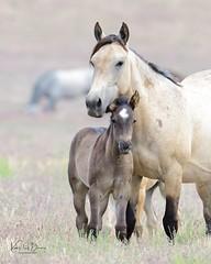 2019 June Wild Horses
