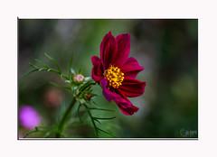 « La vie est une fleur. L'amour en est le miel.» Citations de Victor Hugo