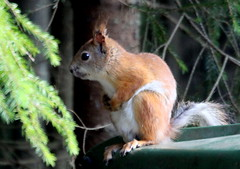 The youngster squirrel..