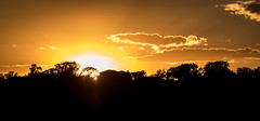JazzFest Sunset