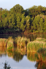 Episy swamp nature reserve - Photo of Nonville