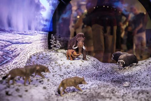 Smithsonian - David H. Koch Hall of Fossils