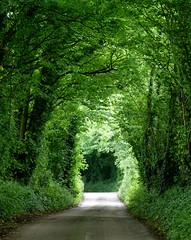 Tree tunnels of Dorset