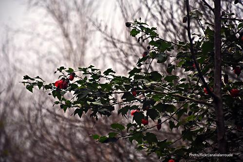 Invierno en rojo. (1)