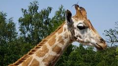 2019 June West Midlands Safari Park