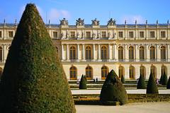Shaped trees of Versailles gardens, Paris - Photo of Magny-les-Hameaux