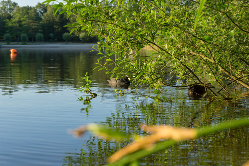 Lakeside nature