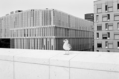 Oslo Opera House | Canon EF
