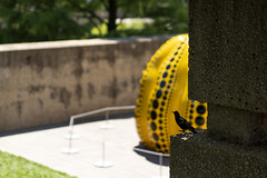 Little Bird at the Sculpture Garden