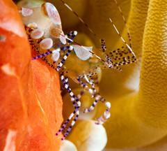 florida diving