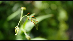 Vert - Photo of Gasny