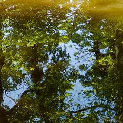 arbres et eau (IMGP2250)