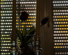 Schutz für die Schnittblumen