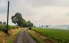 Nebel über dem Auenland - Photo of Montbray