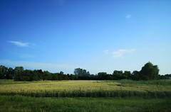 summer - Photo of Herrlisheim
