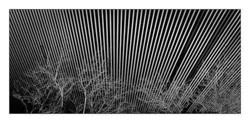 Trees & Lines