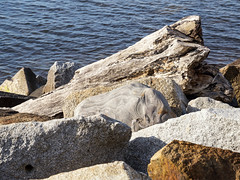 Wood and stones at the Baltic Sea