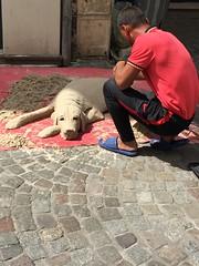 Artiste de rue : Le chien en sable  ..
