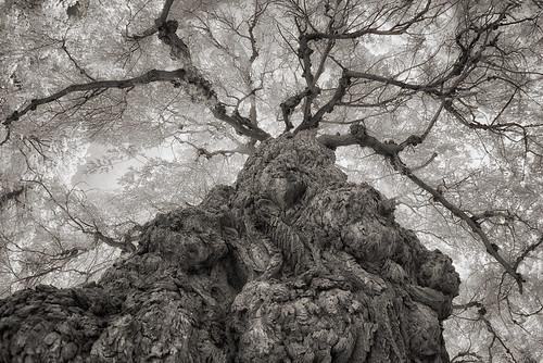 _DSC2108 Willow Tree 2