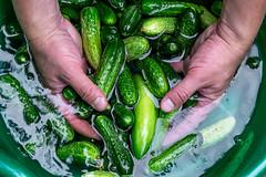 Men's hands wash in water fresh cucumbers