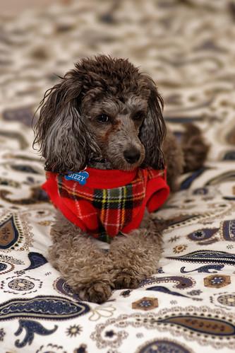glamour doge
