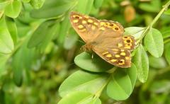 lapopie-pechmerle 072 - Photo of Lentillac-du-Causse