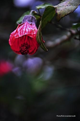 Invierno en rojo (3)