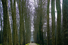 Allée d'Apollon, Versailles gardens, Paris - Photo of Bois-d'Arcy