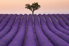 Die unendlichen Weiten des Lavendels in der Provence😍