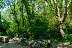 2235 Labeaume. Des sentiers de randonnée dans les sous-bois