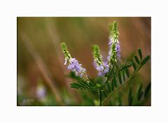 « Sois comme la fleur, épanouis-toi librement et laisse les abeilles dévaliser ton coeur !» Citation de Ramakrishna